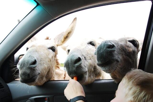 Donkey Sanctuary Bonaire - Bezienswaardigheden Bonaire