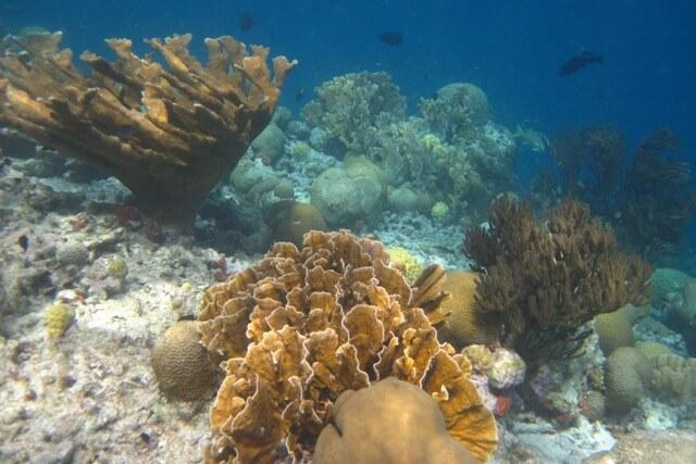 Snorkelen Klein Bonaire