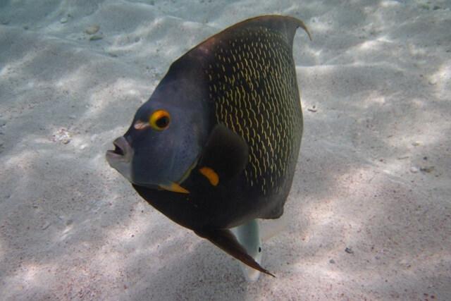 Snorkelen Bonaire - Bezienswaardigheden Bonaire
