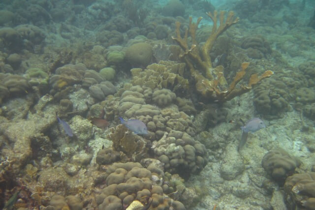 Snorkelen Bonaire - Karpata