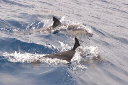 Dolfijnen spotten in de Algarve
