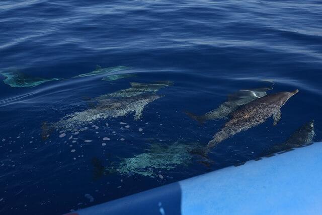 Bezienswaardigheden Madeira - Dolfijnen en walvissen spotten