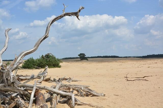 Nationaal Park De Hoge Veluwe - Zandverstuiving De Pollen