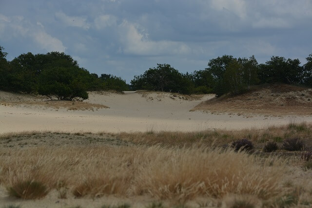 Wandelen Loonse en Drunense duinen - Mooiste natuur Noord-Brabant