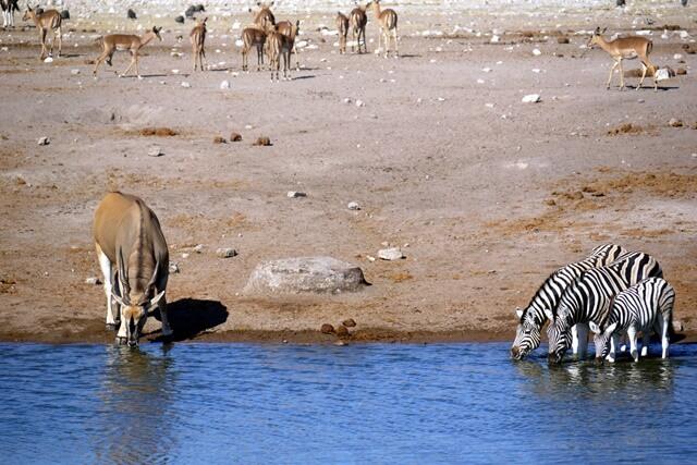 Waterhole Etosha National Park, Namibië