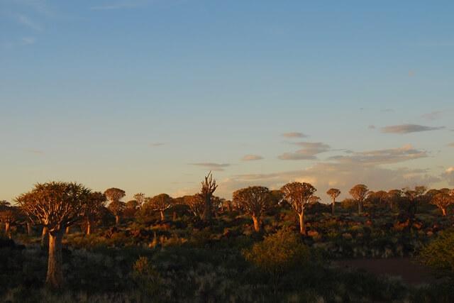 Zonsondergang Kokerbomenwoud, Keetmanshoop, Namibie