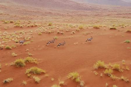 Georganiseerde reizen Namibië