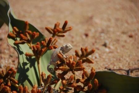 Swakopmund en Living Desert tour