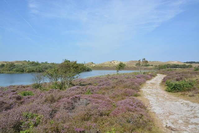 Mooiste natuur Nederland - wandelen Schoorlse duinen