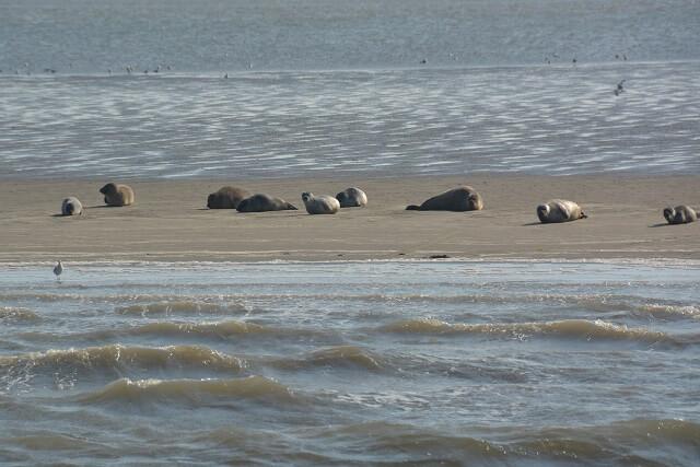 Zeehonden spotten met de boot wadden Noord Holland Nederland
